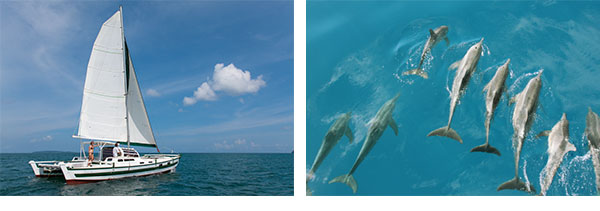 sailing with dolphins with siam sailing charter yachts